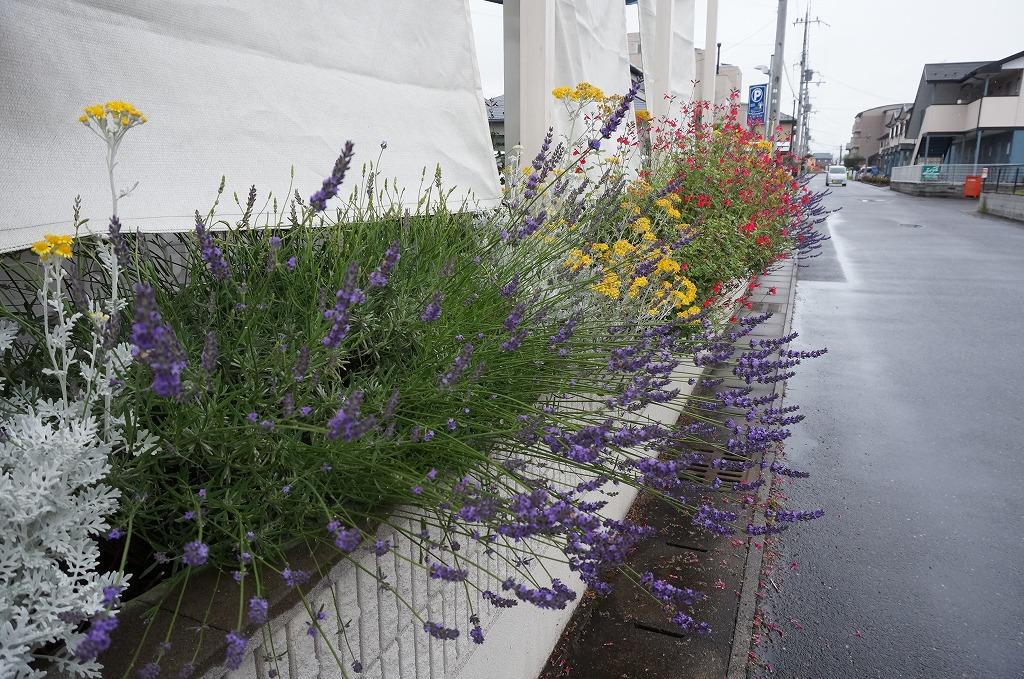 道沿いの花