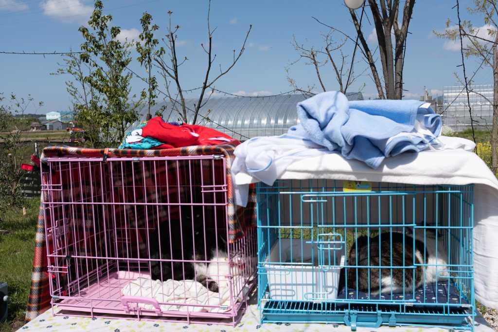 湖南市のHATで開催される犬猫譲渡会